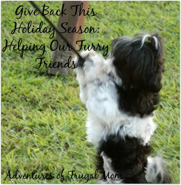 Give Back this Holiday Season: Helping Our Furry Friends