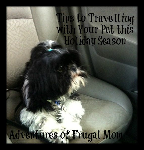 Tips for Travelling with Your Pet this Holiday Season
