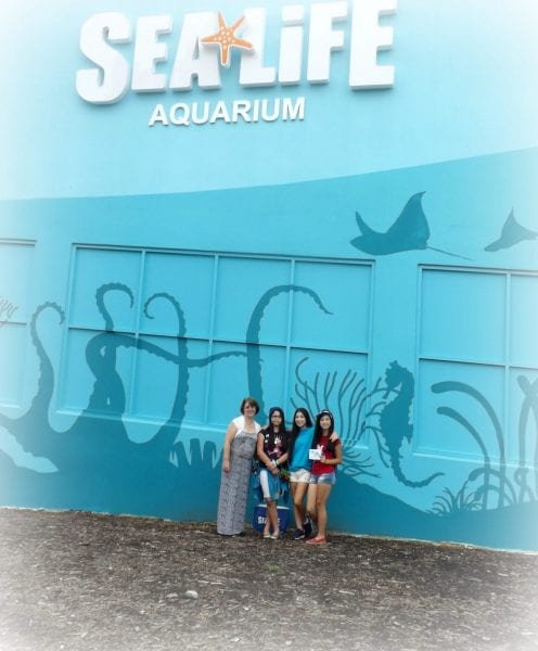 Sea Life Aquarium A Relaxing Way to Spend a Rainy Day