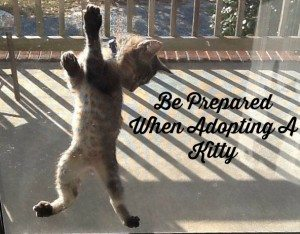 be prepared when adopting a kitty