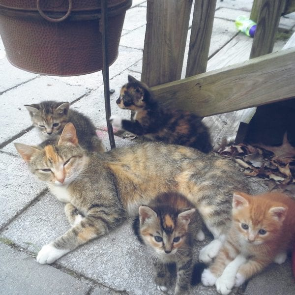 Introducing The Kittens and Winners