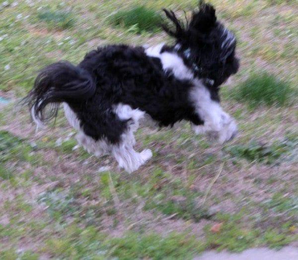 allie jumping for joy
