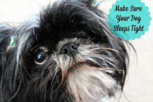 Make Sure Your Dog Sleeps Tight