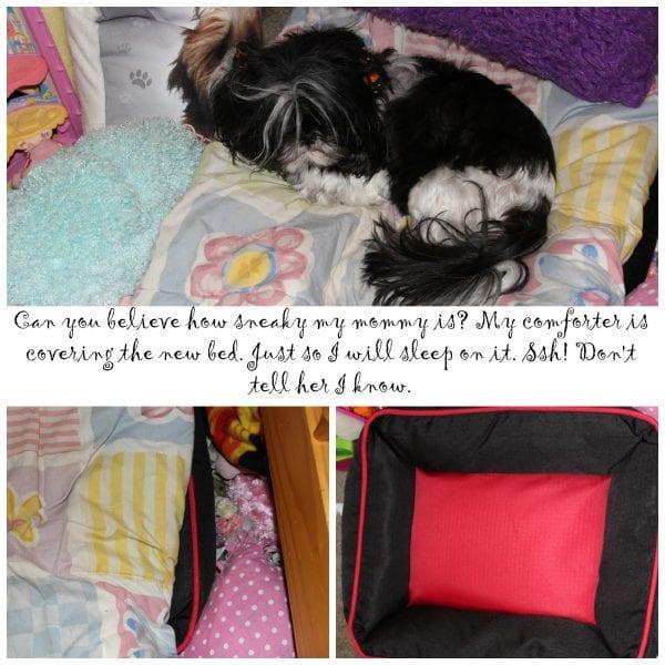Allie's Talking About Pet Adoption
