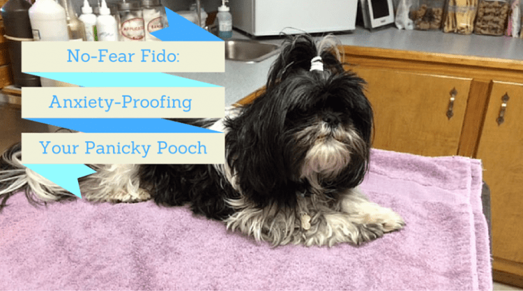 No-Fear Fido: Anxiety-Proofing Your Panicky Pooch