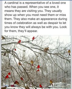 cardinals loved ones
