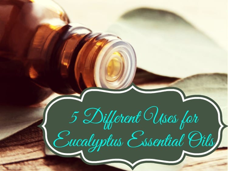 5 Different Uses For Eucalyptus Essential Oils