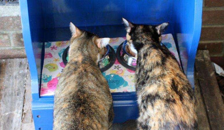 Create A Unique Cat Feeding Station