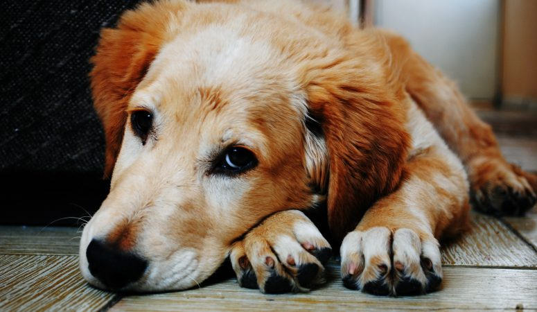 How to Spot the Signs and Symptoms that Your Dog isn't Well