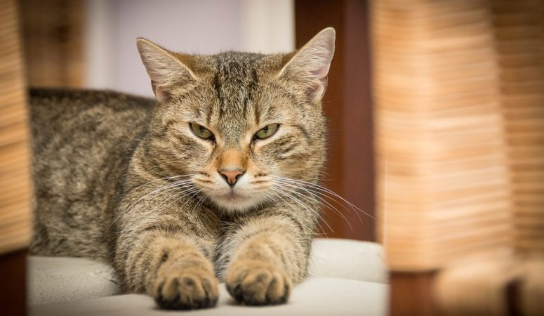 Purr-fect Tips For A Beautiful House When You Have Cats!
