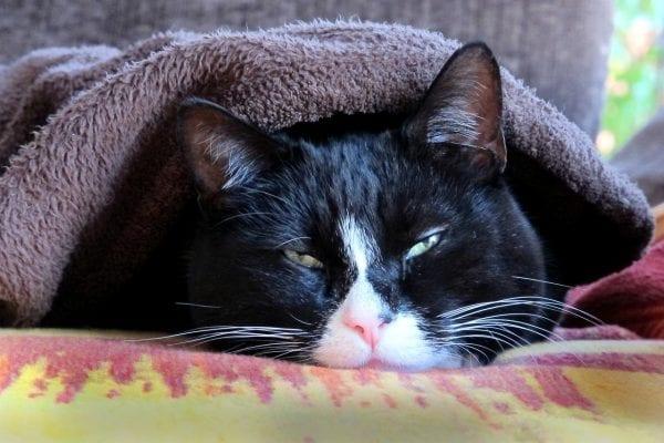 Purr- fect cats