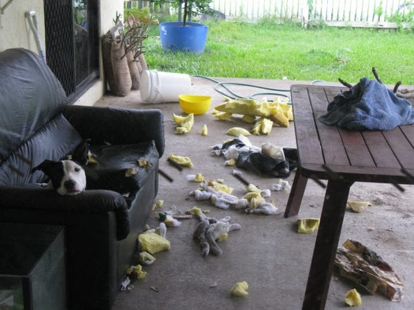behavior of dogs