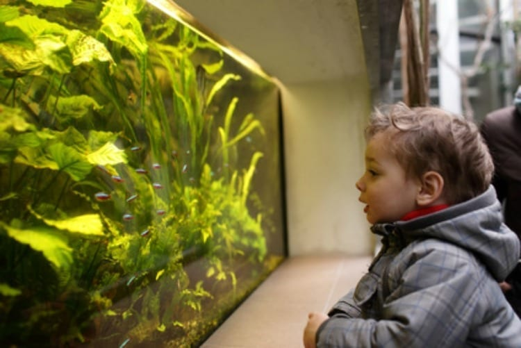 Why Aquascaping Is Great For Kids Creativity