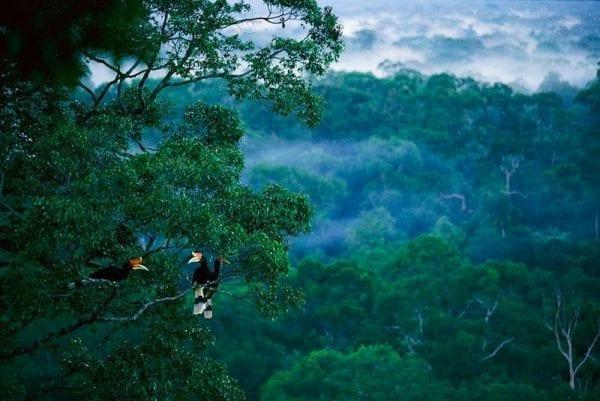 bird watcher birds in a tree