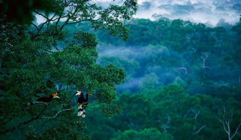 Best 5 Destinations for Bird Watchers