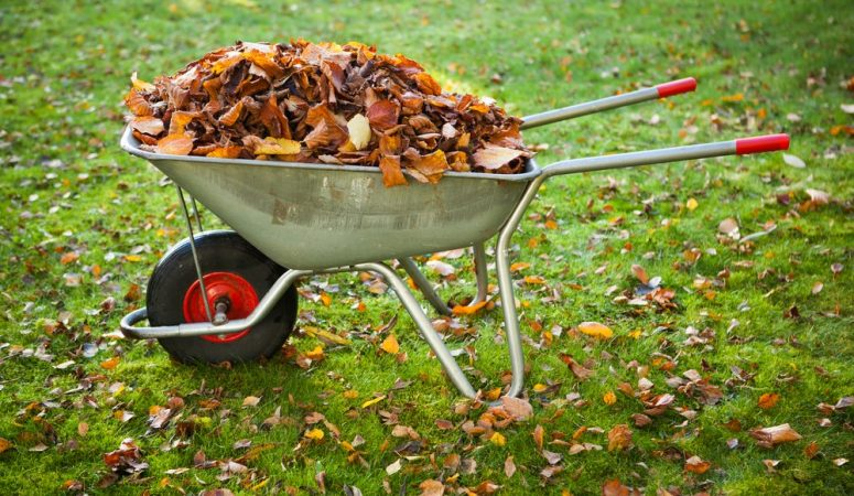 How Can Dried Leaves Benefit Your Organic Vegetable Garden?