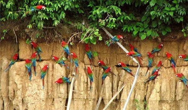 macaw bird watchers