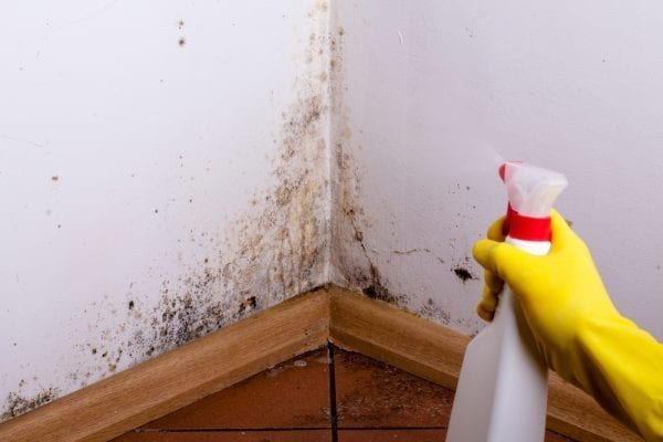 4 Reliable DIY Ways to Remove Mold