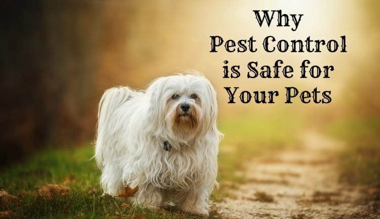 Why Pest Control is Safe for Your Pets