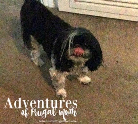 Allie Teaches Sharing is Caring by North Carolina lifestyle blogger Adventures of Frugal Mom