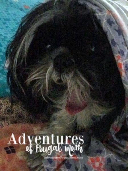 Allie's Corner: Losing Your Pet by North Carolina lifestyle blogger Adventures of Frugal Mom