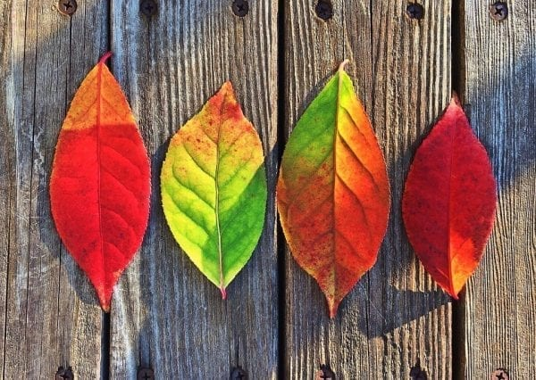 Get Outdoors This Autumn with Free Kids Activities Forest Walks by North Carolina Mom Blogger Adventures of Frugal Mom