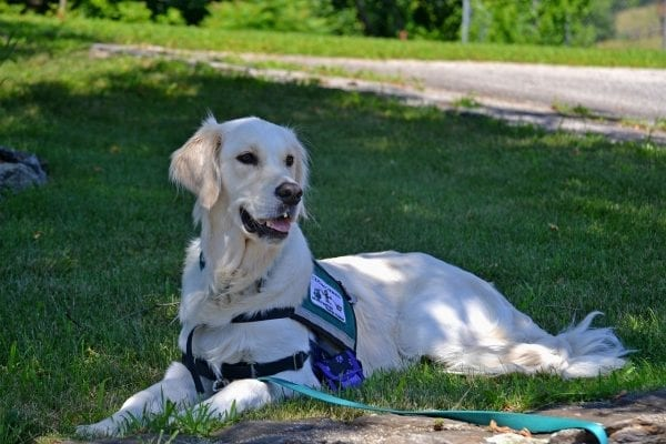 How To Register A Service Dog >> How To Register A Dog As A Service Dog Adventures Of