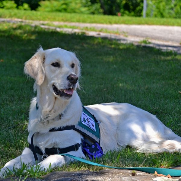 How to Register a Dog as a Service Dog