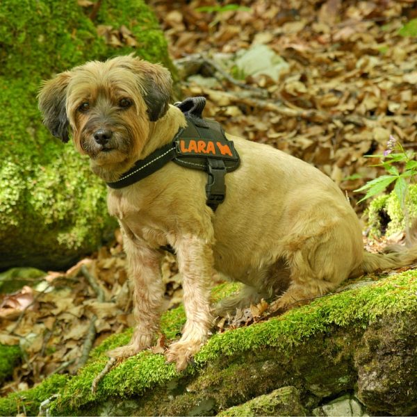 The Top 3 Reasons to Use a No Pull Harness for Your Dog