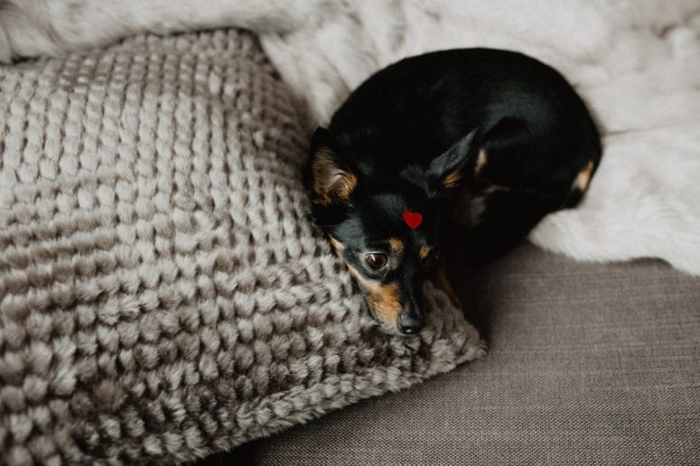 Home Alone: Make Sure Your Pup Doesn't Go Wild Without You