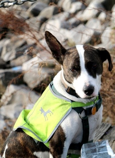 5 Tips to Caring for A Service Animal