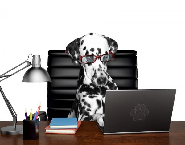 Dogs in the Workplace from North Carolina Lifestyle Blogger Adventures of Frugal Mom