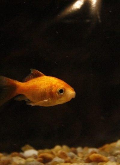 5 Reasons Why Fish Make Good Pets