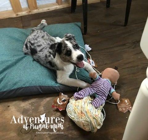 My Koda Buggy from North Carolina Lifestyle Blogger Adventures of Frugal Mom