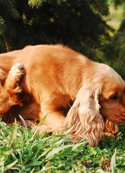 5 Potential Causes for Hot Spots on Dogs