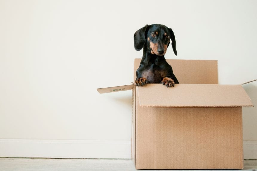 5 Tips to Making Your Move Easy with Small Children
