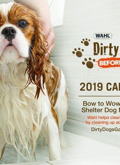 New Calendar Raises Money For Animal Rescues