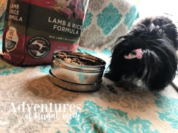 Allie Takes the PURINA ONE® 28-DAY CHALLENGE from North Carolina Lifestyle Blogger Adventures of Frugal Mom