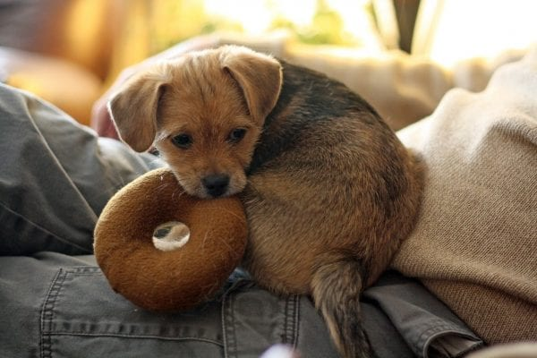 The Top 3 Things To Consider When Buying Interactive Dog Toys from North Carolina Lifestyle Blogger Adventures of Frugal Mom