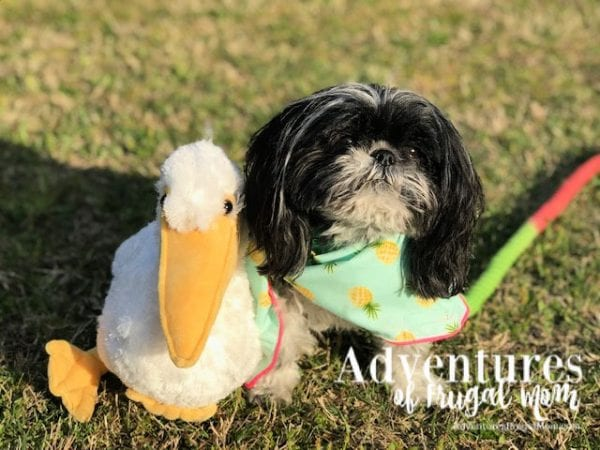 We Adopted #StormBoy from North Carolina Lifestyle Blogger Adventures of Frugal Mom.