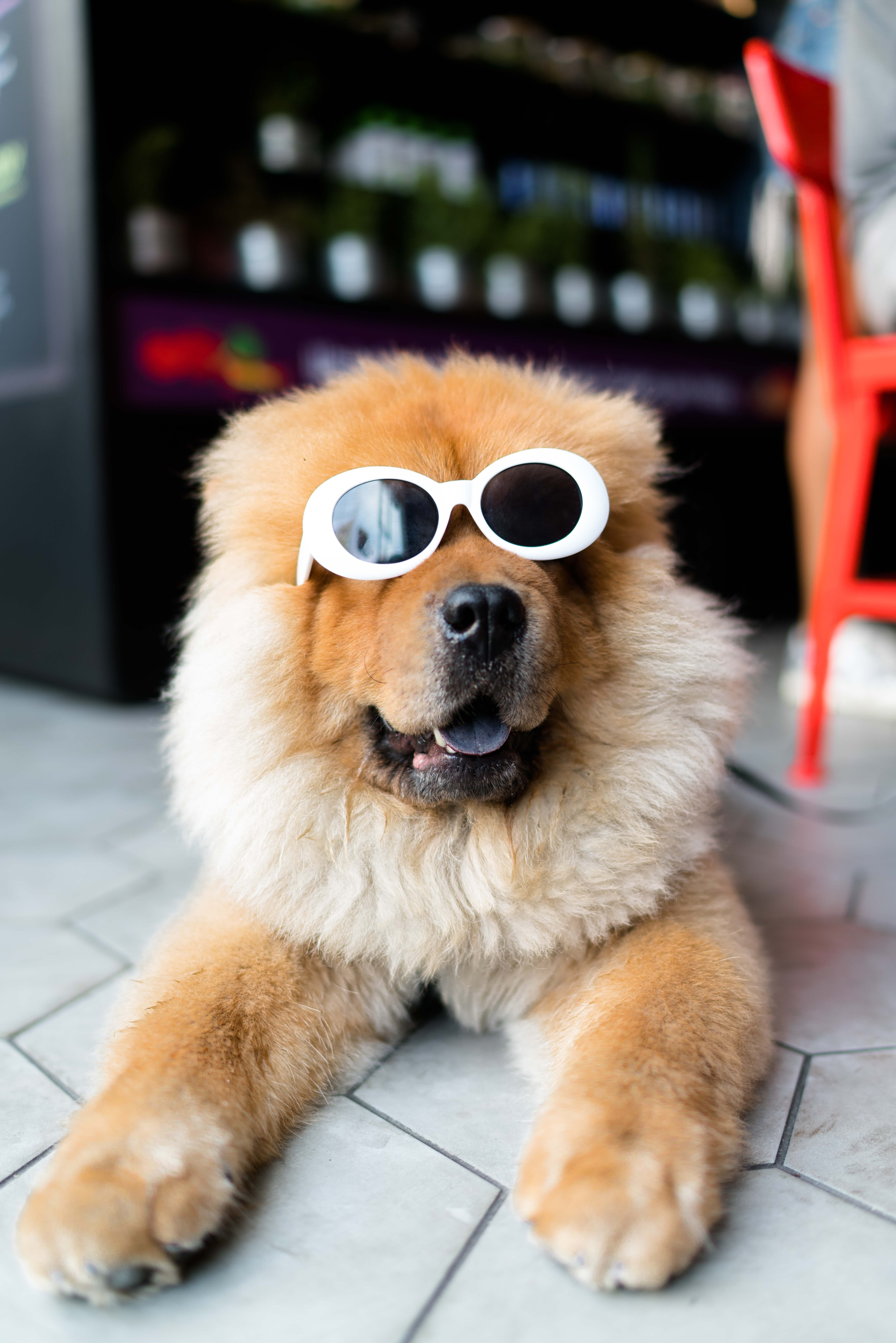 4 Tips to Make a Living at Dog Grooming from North Carolina Lifestyle Blogger Adventures of Frugal Mom