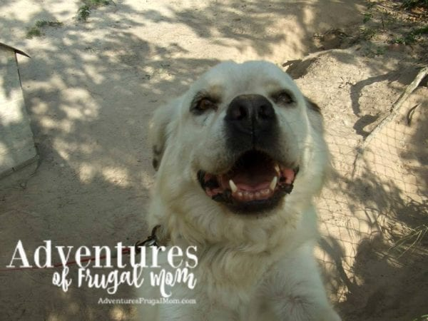 Allie Talks about Adopting Pets from North Carolina Lifestyle Blogger Adventures of Frugal Mom